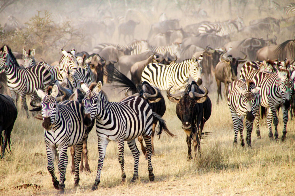 Sights of diverse wildlife during the Wildebeest Migration Safari