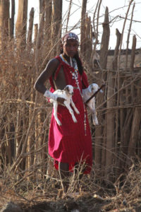 Maasai man with his two goats in Tanzania, Africa