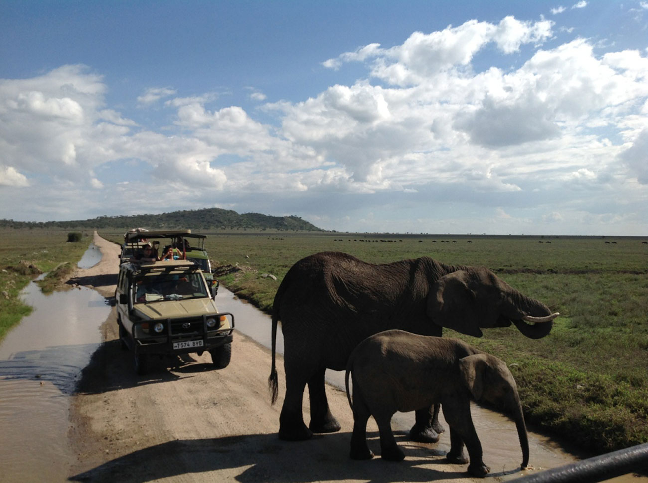 Elephants crossing the road during a Penwell Safari's Tanzania safari