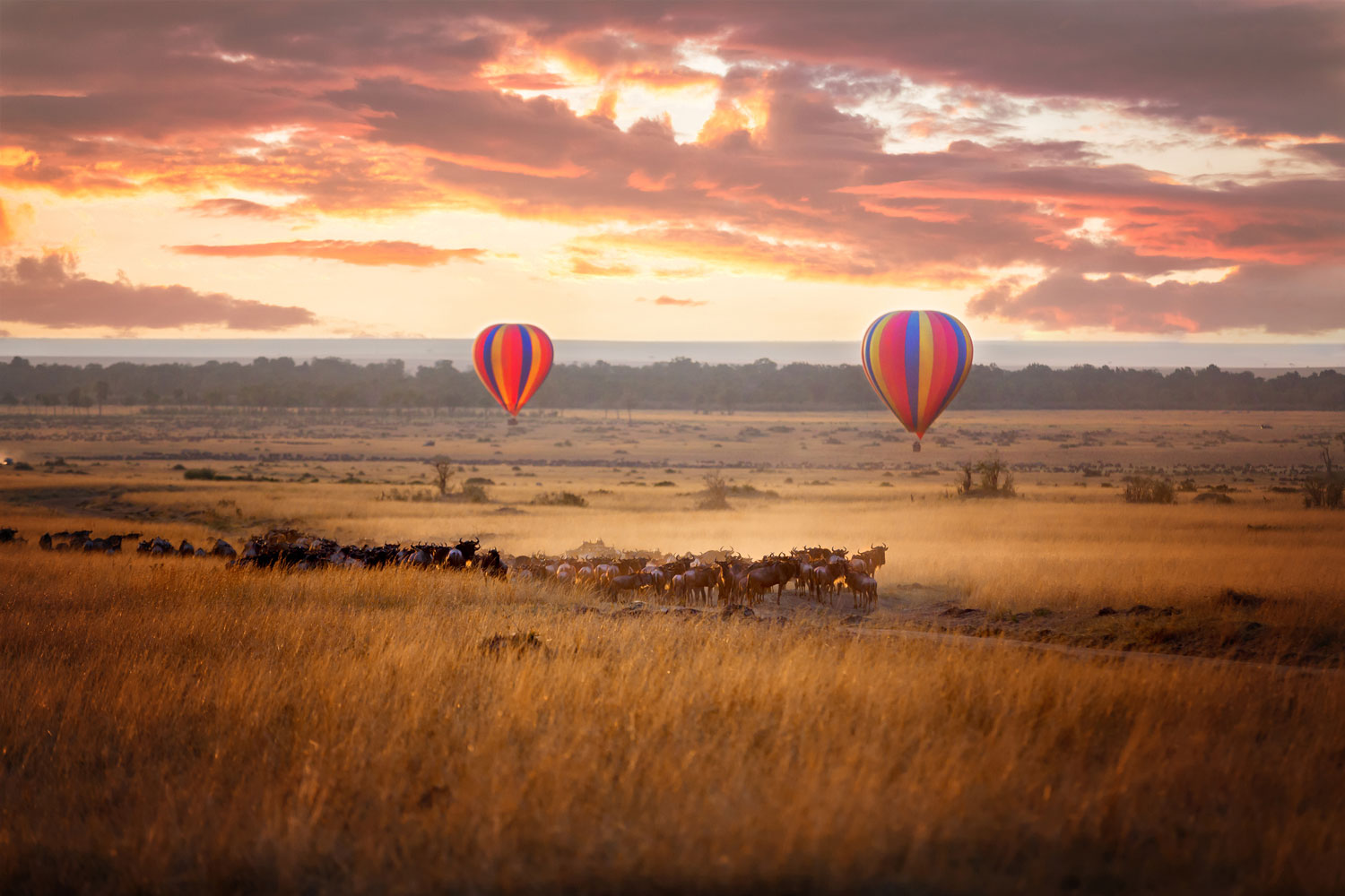 Maasai Mara sunrise safari with wildebeest and balloons