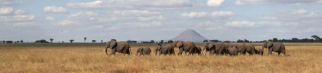 Elephants strolling across the plains.