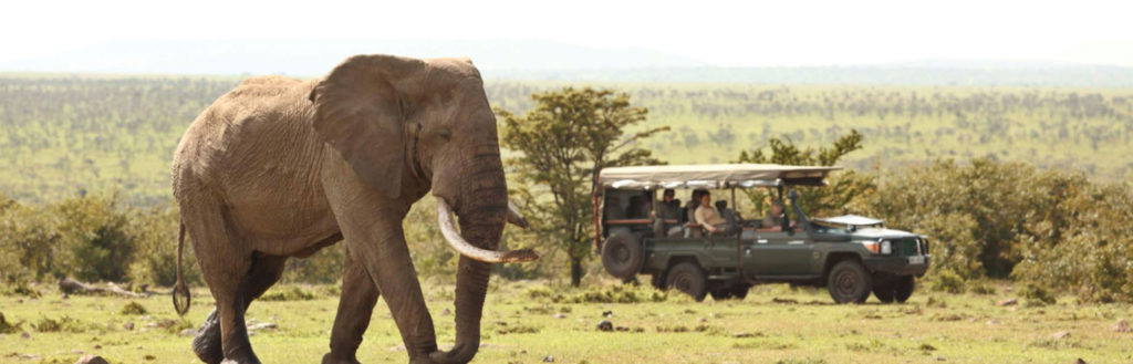 Watching an elephant at Masai Mara Naboisho Conservancy