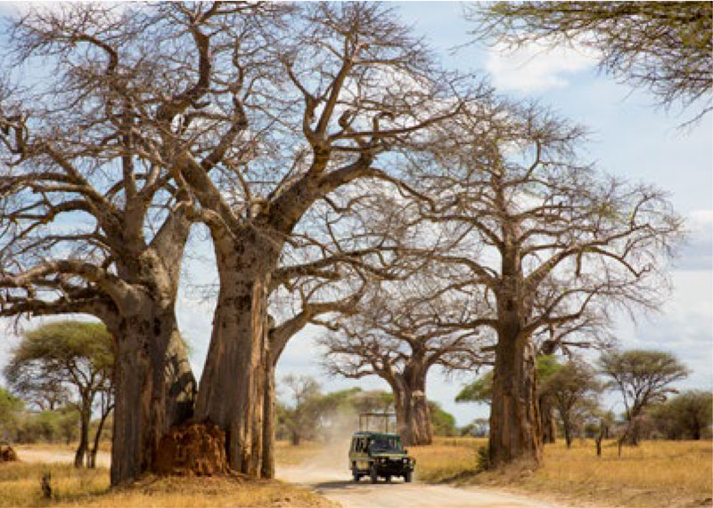 Game drive through Ruaha National Park