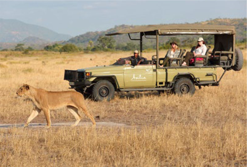 Game drive watching lion at Ruaha National Park