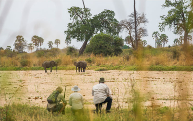 Group watching elephants at Ruaha National Park