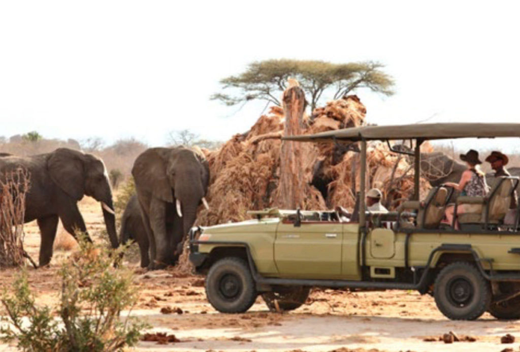 Watching elephants on a game drive in Ruaha National Park