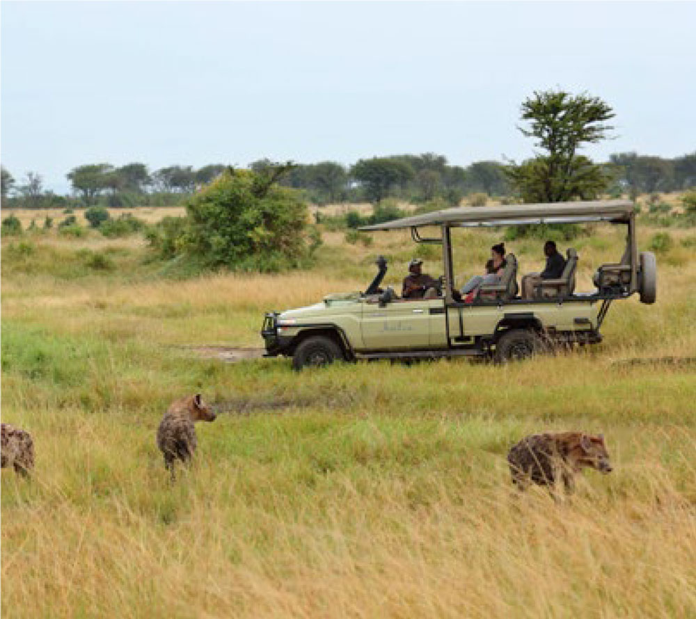 Serengeti National Park game drive