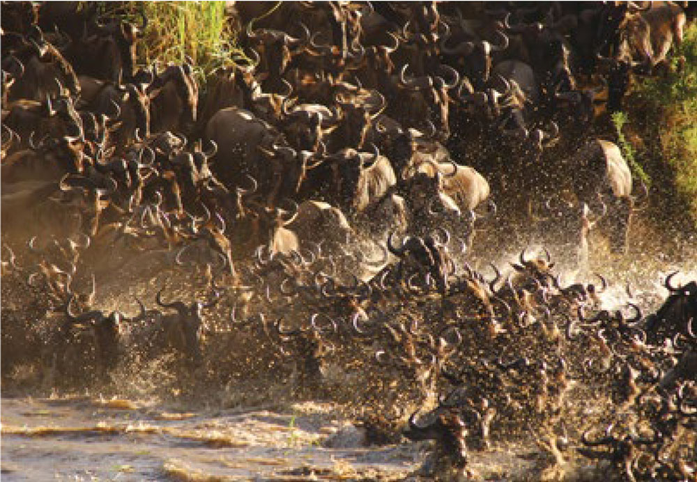 Wildebeest herd at Serengeti National Park