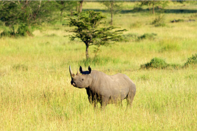 Rhino at Serengeti National Park