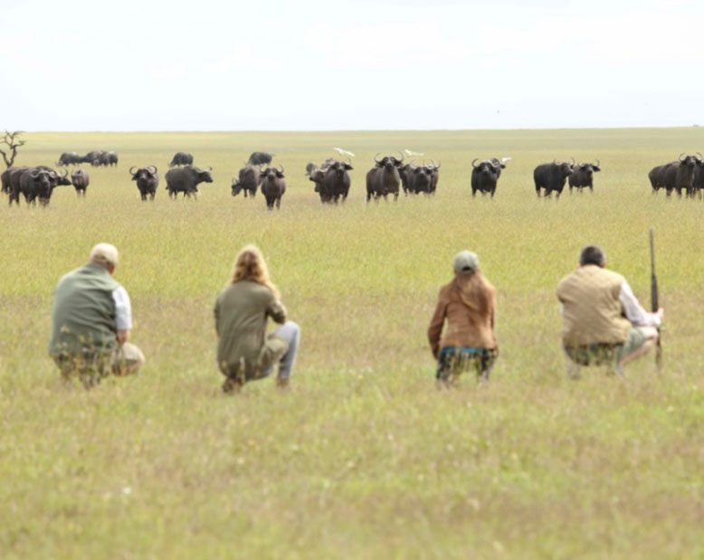 Watching Herd at Ol Pejeta Camp